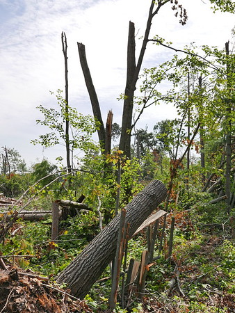 Storm Damage - Nisswa, MN Aug 2016