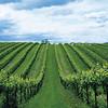 headers_riboli-family-vineyard-napa