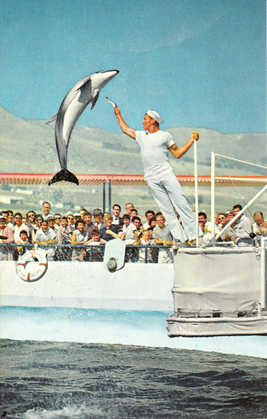 High Jumping Porpoise