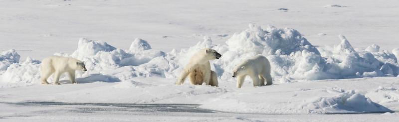Inspirato-Arctic_Expedition18-05-Bear_Fjord-2193.jpg