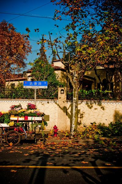 autumn3 (1 of 1).jpg
