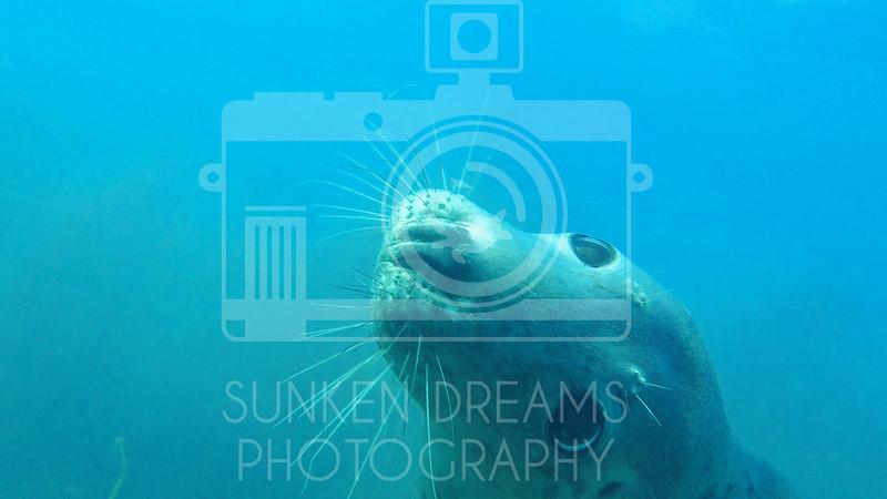 Lundy Island Edit.Still087.jpg