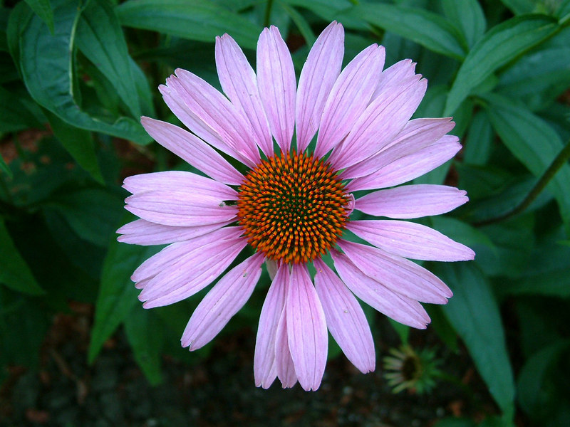 Flower.1.5x7.HR.jpg