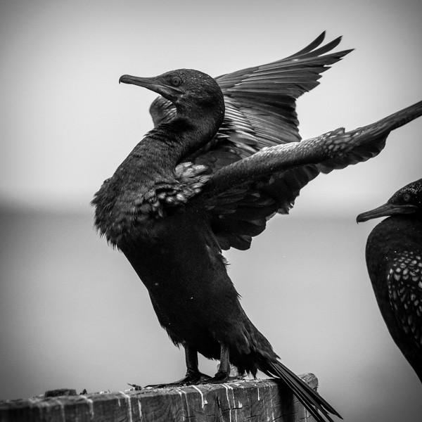 030319 birds _15.JPG
