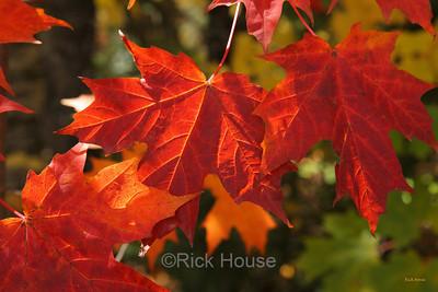 Minnesota Fall Colors