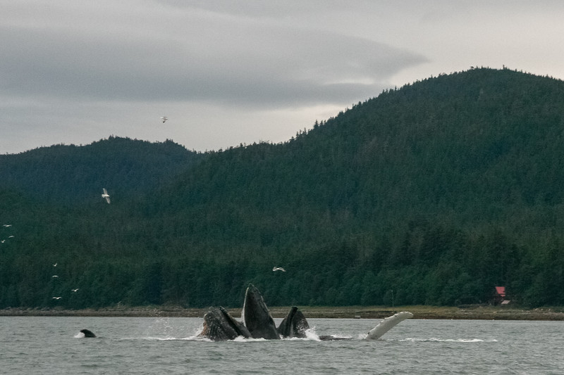 Alaska 2009-353.jpg