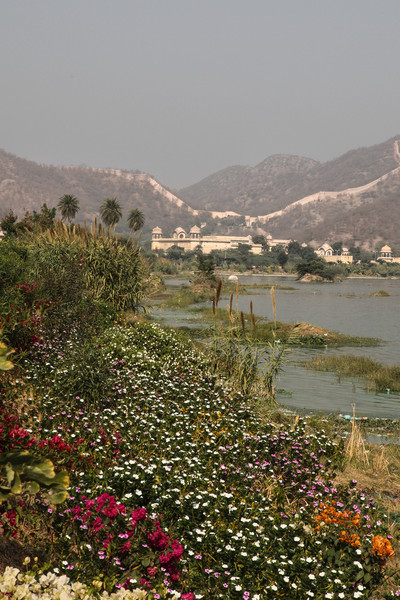 Flowers on the banks of the lake near Jal Mahal
