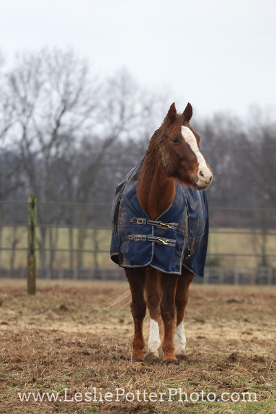 Horse in a Blanket on a Rainy Day
