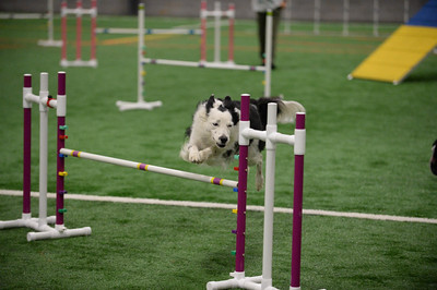 York County DTC AKC Agility Trial October 9-11