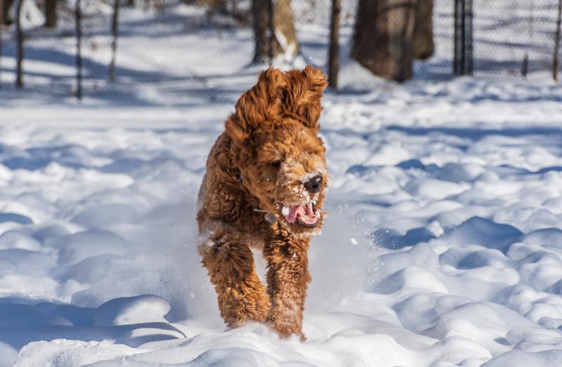 Calvin-7months-snow8-January2019.jpg