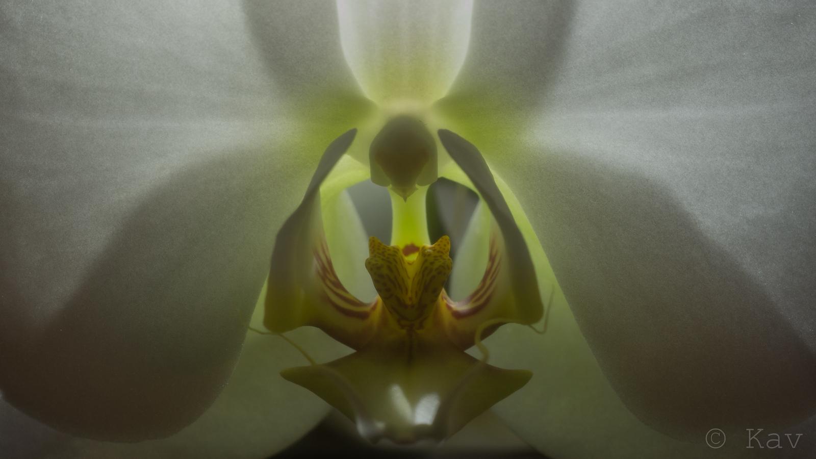 An Orchid[1600x900][OC]