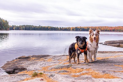 Juno and Piper - Oct 2018