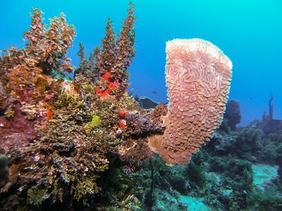 Dive/CSA/Negril/Jamaica - Dec., 2014