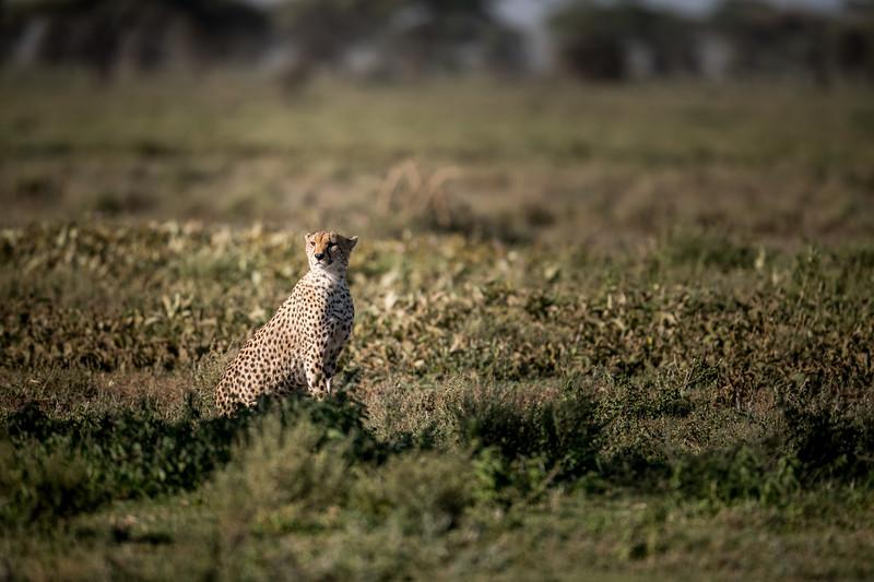 Tanzania_Feb_2018-262.jpg