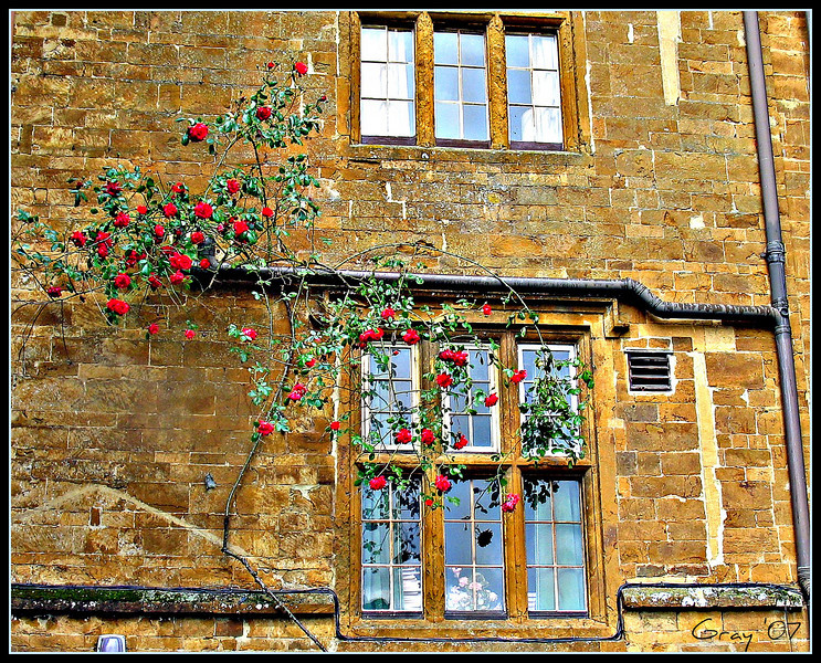 Detail, Rose Wall