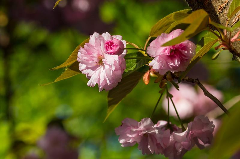 160417_6321 Flowers_44-1.jpg