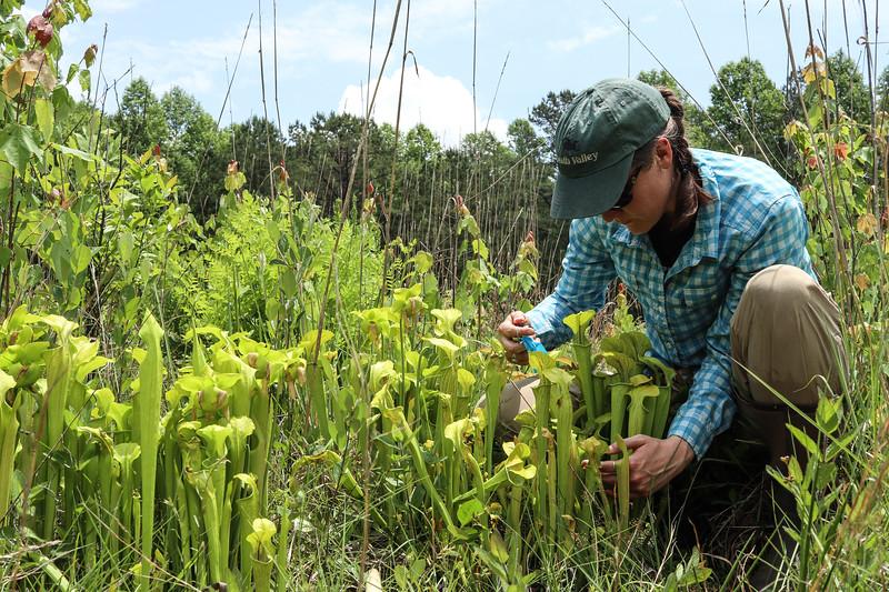 2018 05-Garland CPA-Peeples-Claire Ellwanger counts plants.jpg