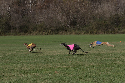 2020 ASFA National Greyhound Specialty Galleries