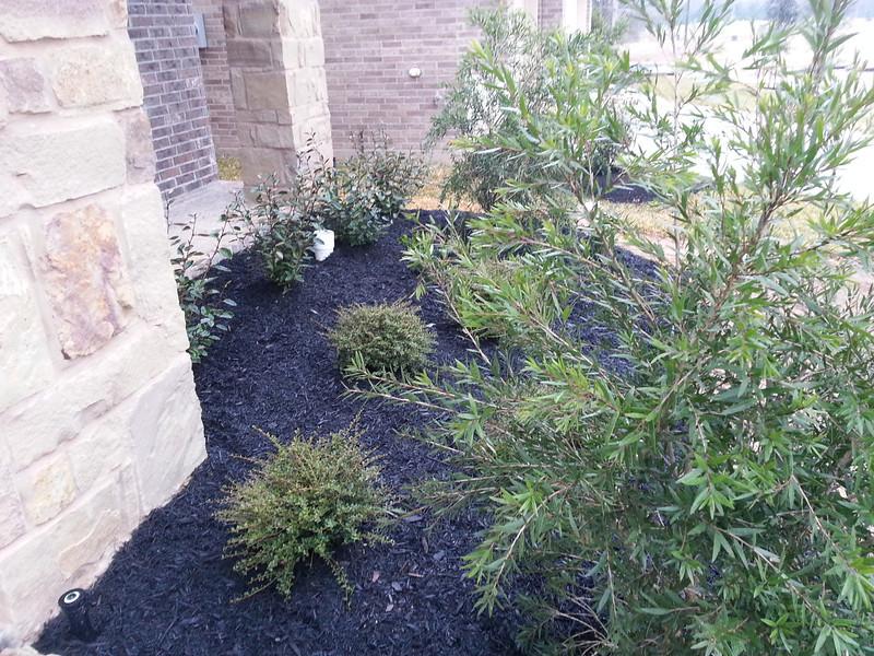 Tree shaped shrubbery