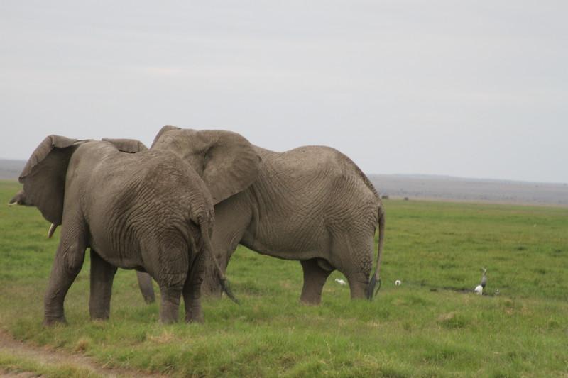Kenya 2019 #2 1589.JPG