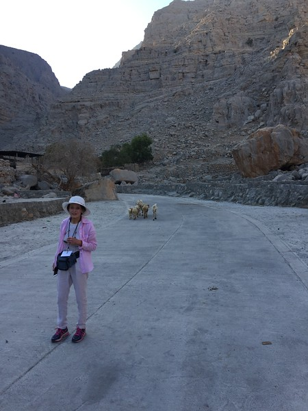 Dee bids farewell to the goats on the Musandam Peninsula in Oman - Bridget St. Clair