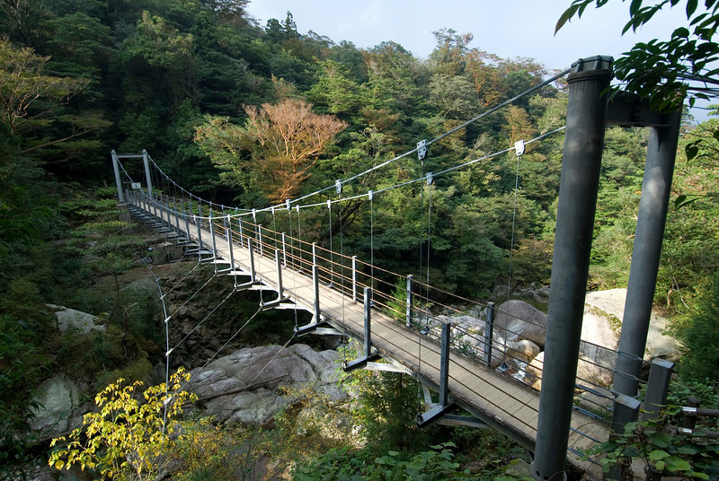 View of the wooden suspension bridge in the Shiratani Unsuikyo - Yakushima, Japan