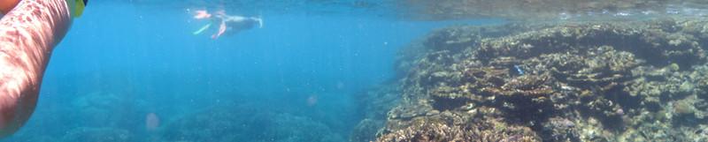 09. Lady Elliott Island-0147.jpg