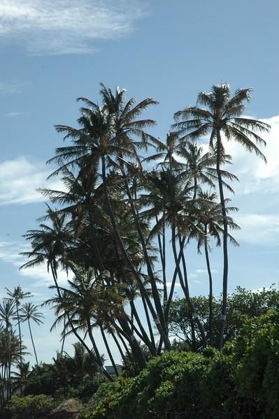 Hawaii - Kahala Beach-51.JPG