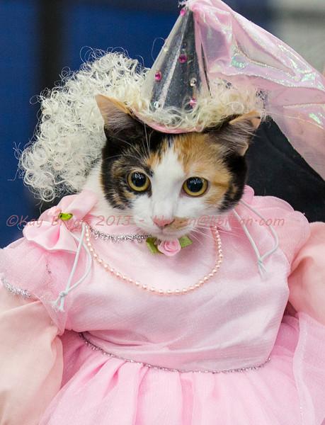 CatShow2014155.jpg