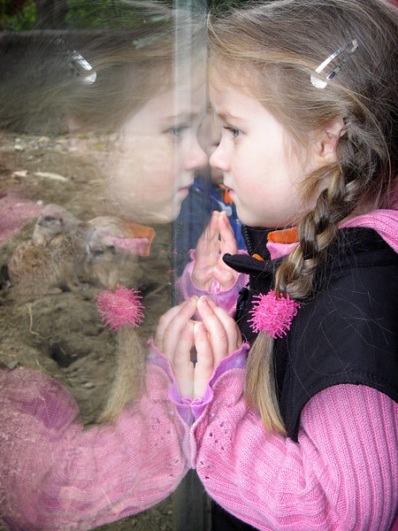 12/16 - Lili is looking at the meerkats in the San Diego Wild Animal Park.