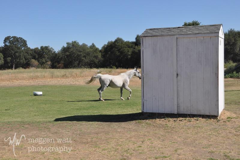 EB&Horses-112.jpg