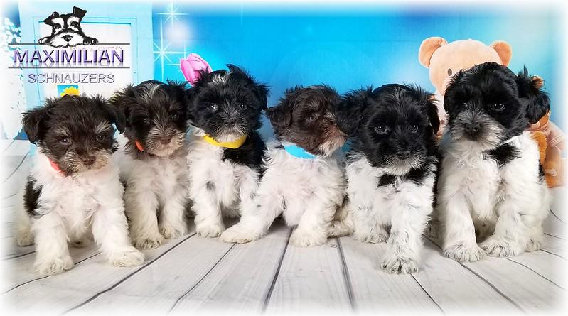 Maddie Pups 002.jpg