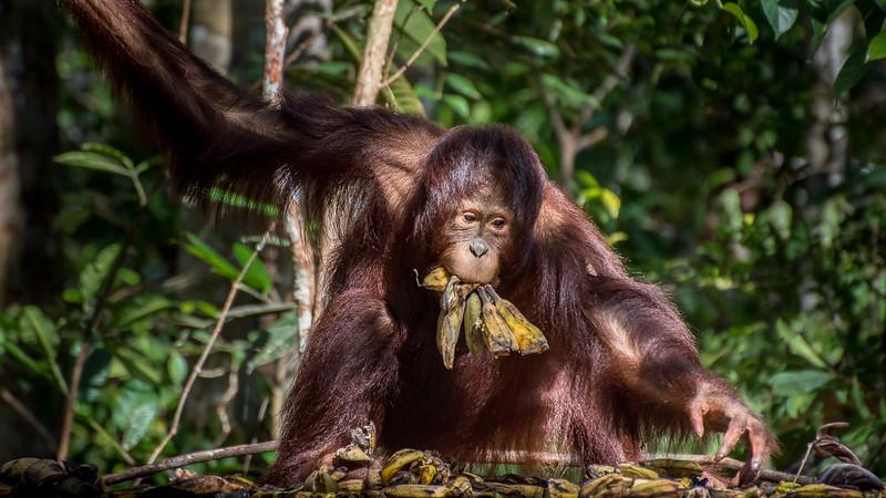 Borneo-2262.jpg