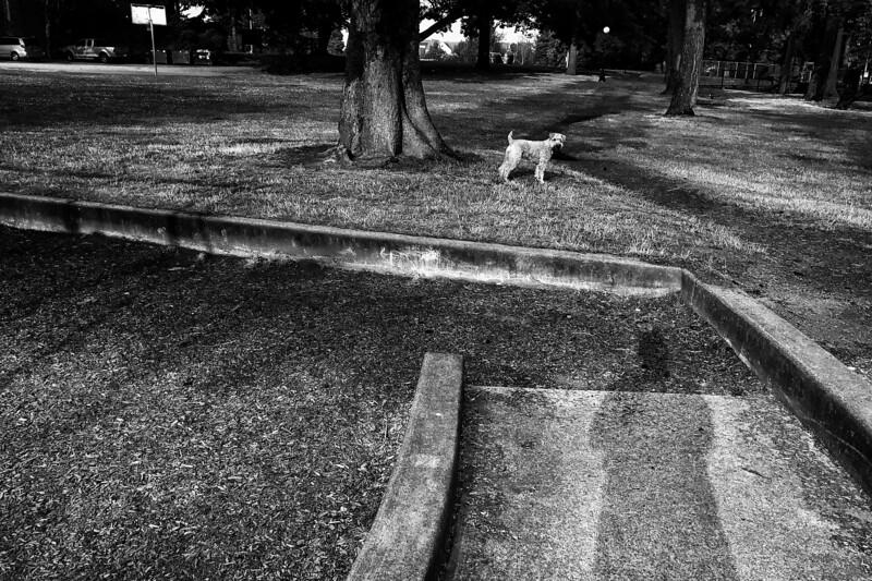 Snapseed.tiff