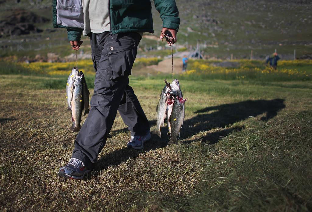 . Trout caught in a nearby stream are carried on July 30, 2013 in Qaqortoq, Greenland.  (Photo by Joe Raedle/Getty Images)