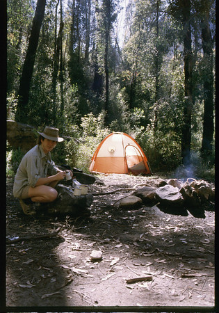 1985 Blue Gum Forest