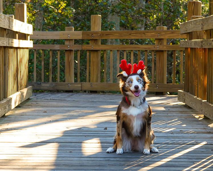 Lady deer II.jpg
