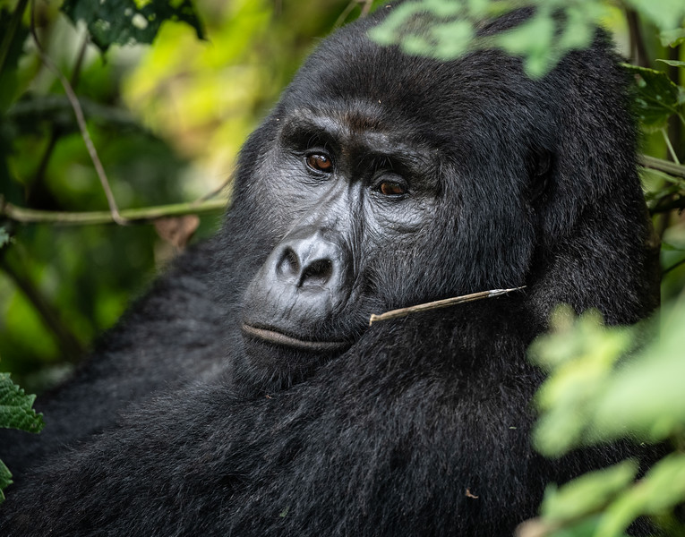 Uganda_T_Gor-2305.jpg