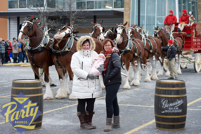 Clydesdale Portraits 8.jpg