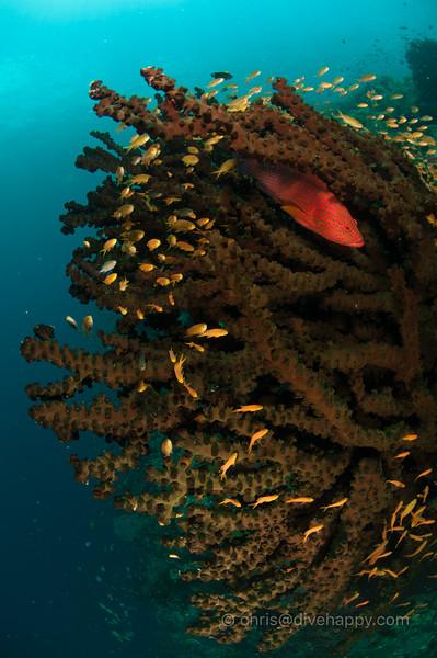 tubbataha-reef-2017-divehappy-chris-mitchell-7.jpg