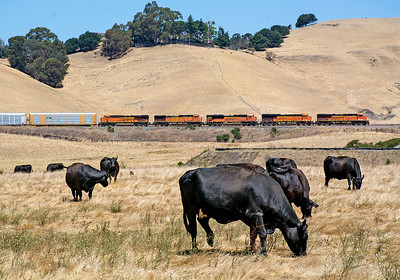 BNSF in the Bay Area