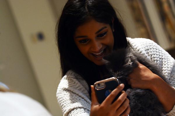 10022018 SS De-stress with Kittens