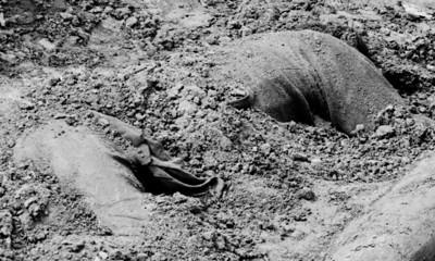 Confederate dead in trench