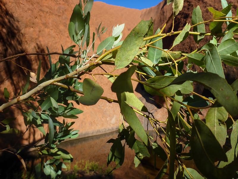 04. Uluru (Ayers Rock)-0239.jpg