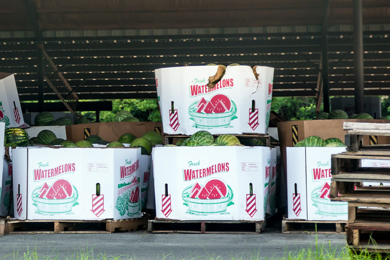 shed of watermelons to ship