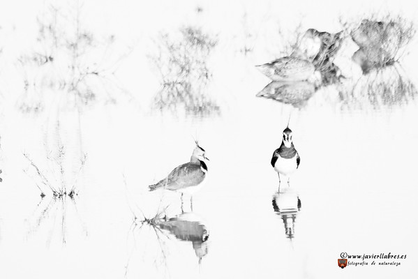 Dibujando aves