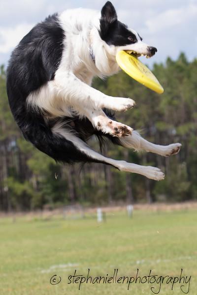 _MG_3286Up_dog_International_2016_StephaniellenPhotography.jpg