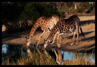 2011 Kruger, South Africa