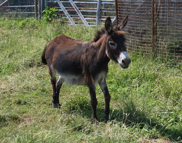 DonkeyDSC_1736.jpg
