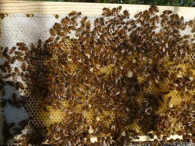 Bees - next check